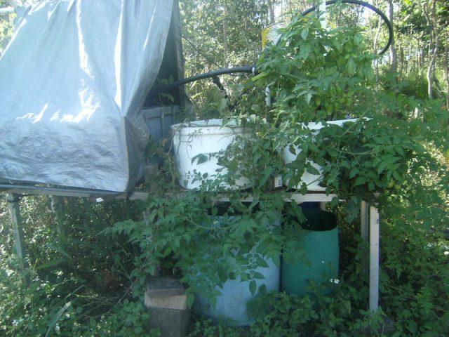 aquaponics set up
